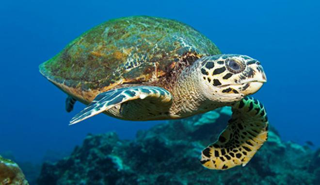 Turtle Trip 3 Main