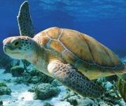 turtle trip zante