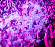 foam party zante